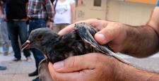 Balık ağına takılan güvercini vatandaşlar kurtardı