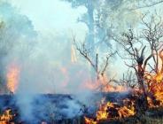 Suriye'de başlayan orman yangını Hatay'a sıçradı!