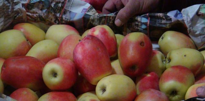 """Kağızman'ın """"uzun elma""""sına yoğun talep"""