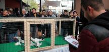 """Tekirdağ'da """"güvercin güzellik yarışması"""" düzenlendi"""