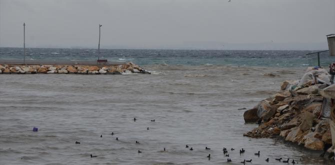 Yalova'da deniz kahverengiye boyandı
