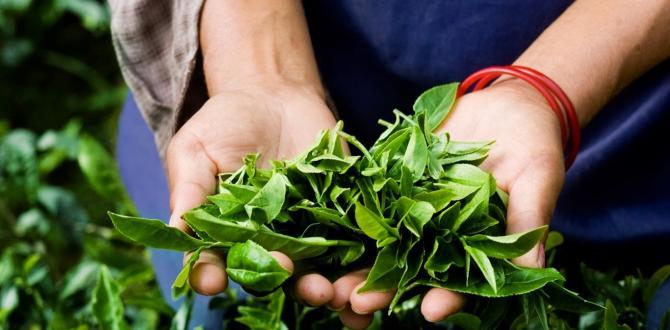 Türk çayı 85 ülkeye satıldı