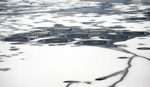 Çat Baraj Gölü, buz tuttu