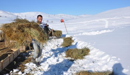 Doğu'da besicilerin kış çilesi