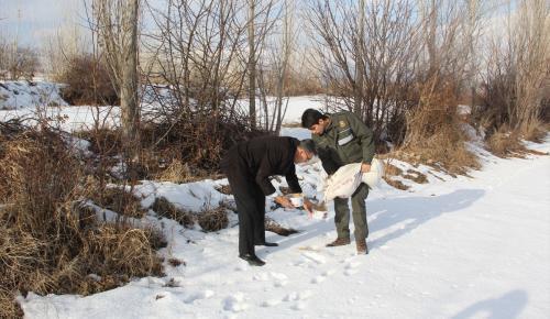 Dondurucu soğuklarda yaban hayatını unutmadılar
