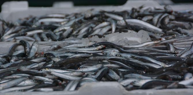 Fırtına yüzünden Kuzey Ege'de kalan tekneler balıkla doldu