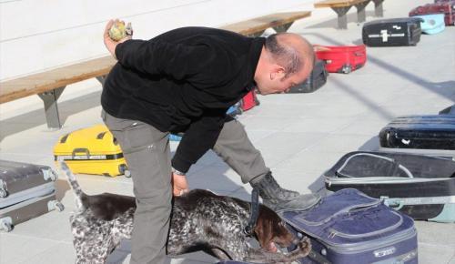 Gümrüklerdeki dedektör köpeklerin sayısı arttı