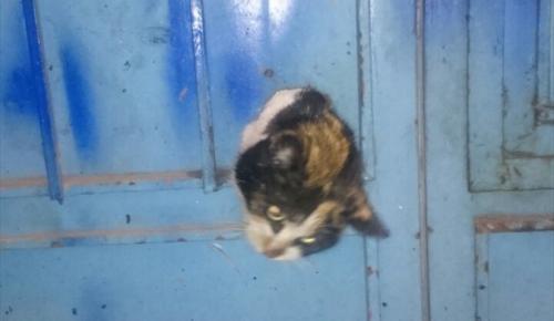 Kapıya sıkışan kedi yavrusu kurtarıldı