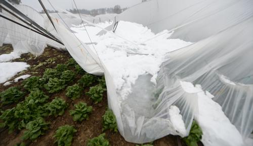 Kar yağışı seraları vurdu