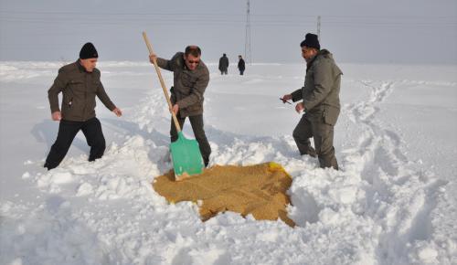 Karda yaban hayatına yem desteği