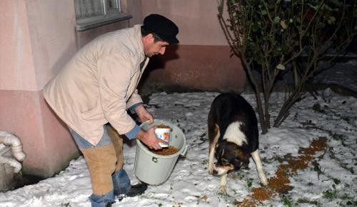 Sakarya'da yaban ve sokak hayvanlarına zengin menü