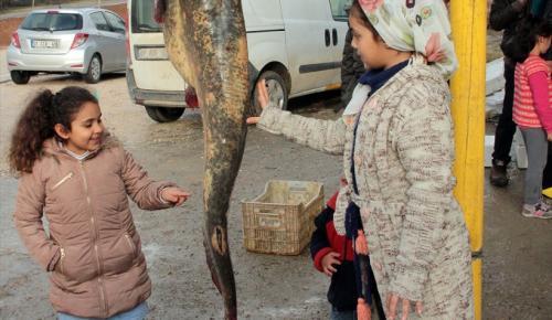 Seyhan Baraj Gölü'nde 50 kilogramlık yayın balığı yakalandı