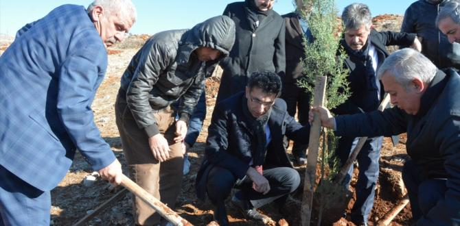 Siirt'te 30 bin fıstık fidanı toprakla buluştu