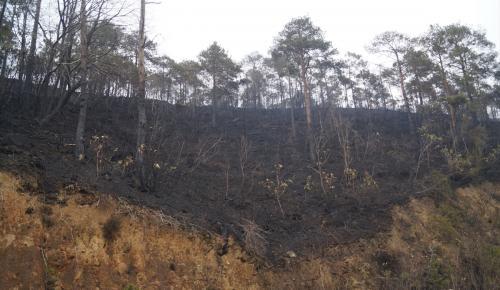 GÜNCELLEME – Sürmene'deki orman yangını söndürüldü